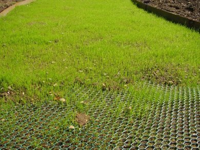 Grass grows through the TERRAM TURFPROTECTA plastc mesh