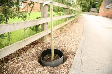 TERRAM India\'s root guard installed around a newly planted tree